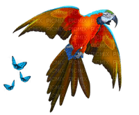 parrot - butterfly-exotic-perroquet