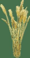 Wheat.Blé.Plants.plante.Plant.Trigo.Victoriabea