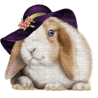 animal-bunny--djur-kanin