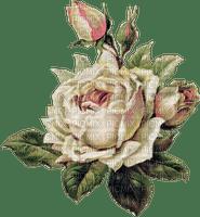 Vintage rose flower , sunshine3
