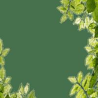 spring printemps blätter cadre frame rahmen deco green tube leaves feuillage overlay