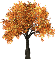 tree autumn automne arbre