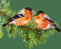 Vögel auf Zweig
