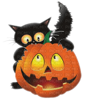 black cat halloween pumpkin chat noir