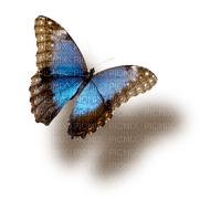 Blue butterfly.Papillon bleu.Deco.Victoriabea