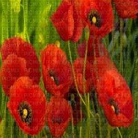 poppy field bp