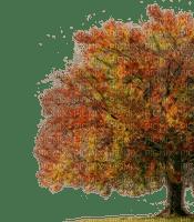 autumn tree automne arbre