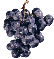 grapes blue raisin rouge