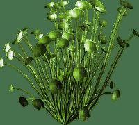 plant plante pflanze beach
