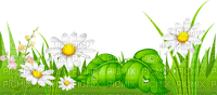 spring grass border daisy flowers