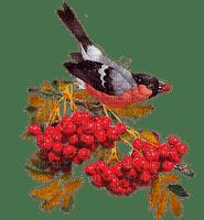 Vogel auf Eberesche
