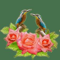 lintu, birds
