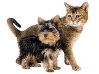 chien chat cat dog