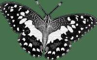 patrcia87 papillon