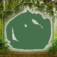 forest frame cadre foret