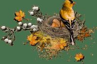 autumn birds automne oiseaux