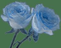 rose bleues Danna1