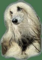 patymirabelle chien