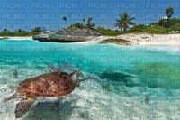 tortue du Mexique