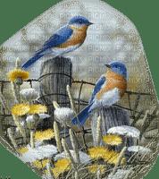 birds autumn oiseaux automne
