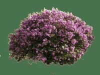 Plate-bande de fleurs