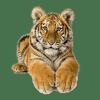MMarcia tigre