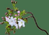 minou-Spring flower -Vårblommor