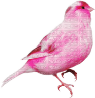 Kaz_Creations Rose Pink Deco Scrap Bird Birds
