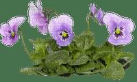 blommor-lila