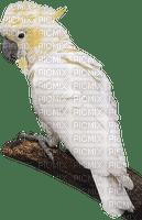 Beautiful Picmix Conny Monsieurs