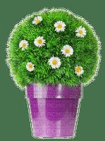spring printemps flower fleur blossoms fleurs   tube deco purple plant garden jardin blumen plante pot