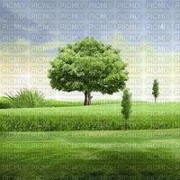 field feld terrain tree baum arbre grass race garden  summer ete paysage landscape fond background