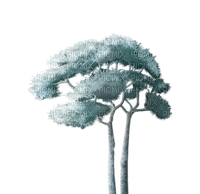 Tree, Water, Nature, Teal - 𝔍𝔦𝔱𝔱𝔢𝔯.𝔅𝔲𝔤.𝔊𝔦𝔯𝔩