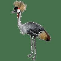 grue OISEAUX crane BIRD