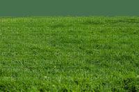 spring printemps summer ete paysage landscape  tube deco  gras grass garden jardin  grass prairie Meadow wiese  lawn