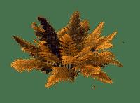 plants, bush, autumn, yellow orange, sunshine3