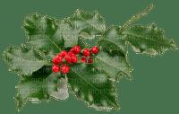 winter hiver berries  beeren plant  deco  tube  branch branches   christmas noel xmas weihnachten Navidad рождество natal