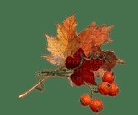 branch _ autumn leaves_branche automne feuille_Blue DREAM 70