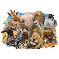africa animals dschungel fond background image animal afrika