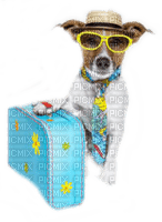 dog vacation suitcase chien vacances valise