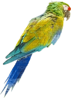 Kaz_Creations Bird Birds Parrot