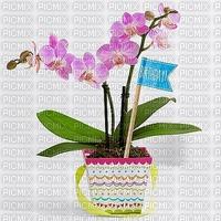 image encre bon aniversaire plante fleur orchidée edited by me
