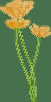 3 Coquelicots oranges Debutante fleurs nature orange poppy orange flower