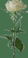 Flower.Fleur.Rose.Victoriabea