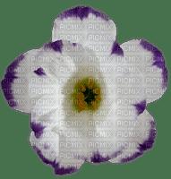 Fleur blanche violette white purple flower