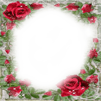 roses frame red