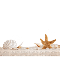 muschel shell shellfish coquille sea meer mer ocean océan ozean  fish  summer ete beach plage  strand  tube sand sable