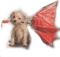 dog with umbrella chien parapluie