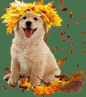 chien dog autumn automne