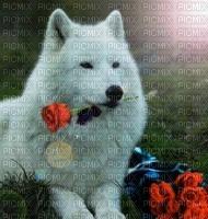 loup blanc et rouse